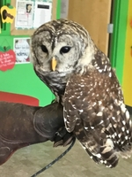 Kindergarten Learns about Owls