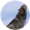 Small_1505327624-grey_wolf