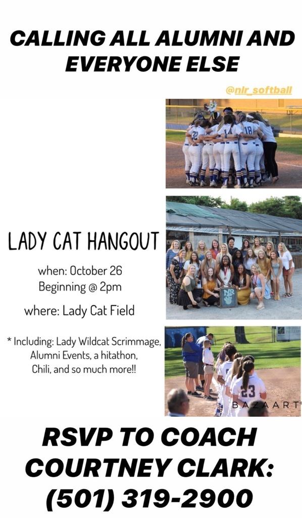 Lady Cat Hangout